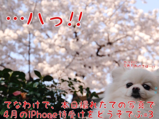 4月は花見iPhone待受でふ=3 -3.jpg