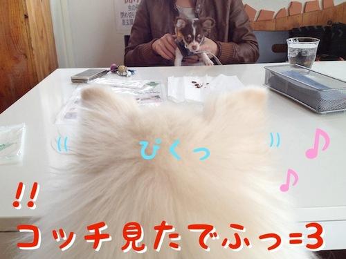 お友達とドッグカフェ その1 -2.JPG