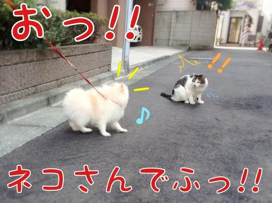 ネコさんとの遭遇。 -.1JPG.JPG