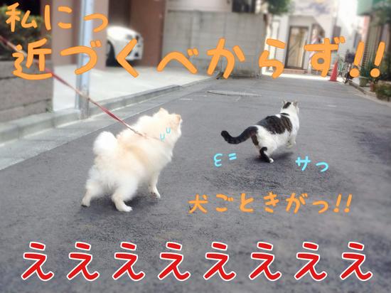 ネコさんとの遭遇。 -3.JPG