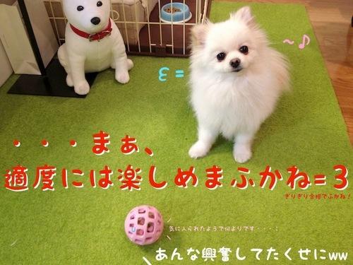 プレゼント(一応誕生日の)-7.JPG