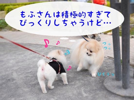 マルキ君の苦悩。(おデート編・完) -1 .JPG