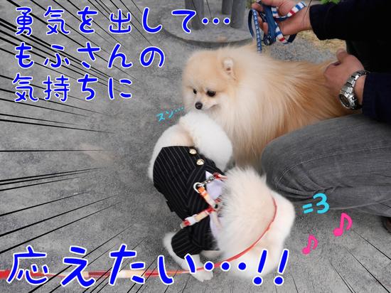 マルキ君の苦悩。(おデート編・完) -2.JPG