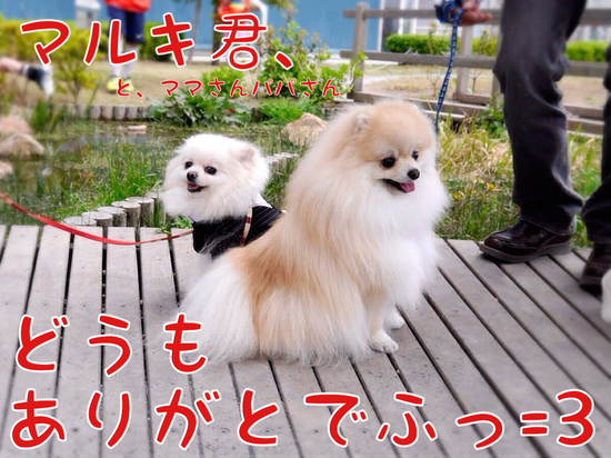 マルキ君の苦悩。(おデート編・完) -5.JPG