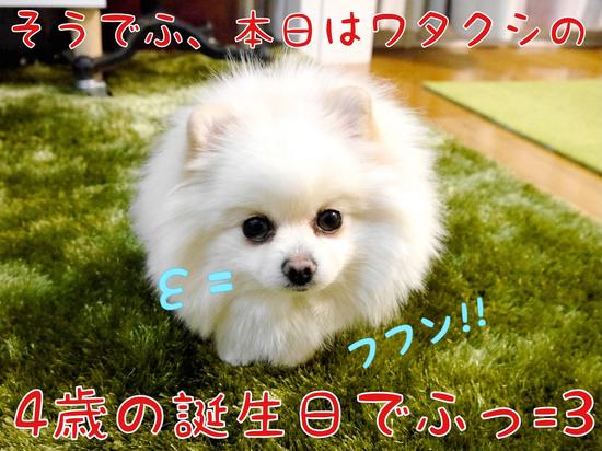 ワタクシ今日で4歳でふっ=3 -2.JPG