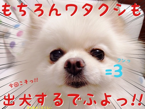 今日は選挙でふねっ=3 -2.JPG