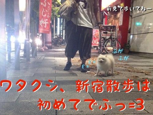 初めての新宿散歩 -その1- -1.JPG