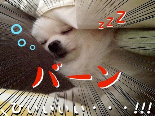 朝、目が覚めるとそこには・・・ -1.JPG