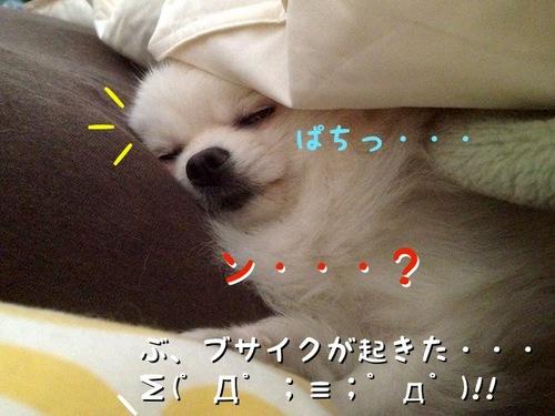 朝、目が覚めるとそこには・・・ -2.JPG