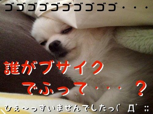 朝、目が覚めるとそこには・・・ -3.JPG