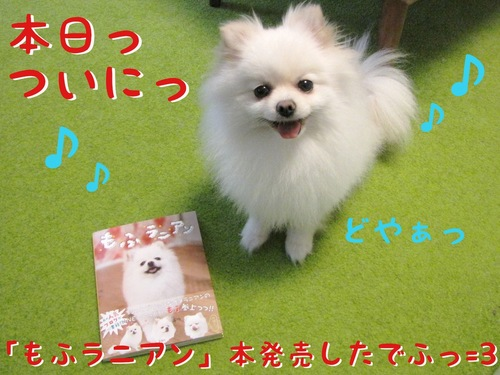 本日「もふラニアン」発売! -1.JPG