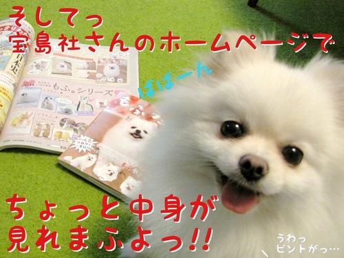 本日「もふラニアン」発売! -4.JPG