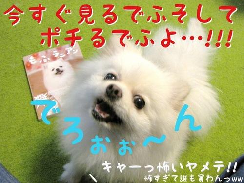 本日「もふラニアン」発売! -5.JPG