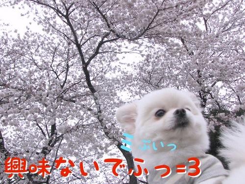桜には・・・。-2.JPG