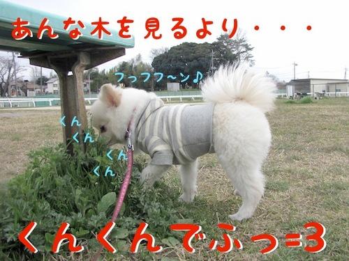 桜には・・・。-3.JPG