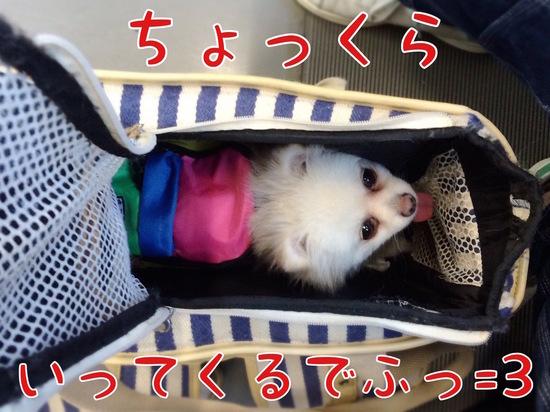 箱根へ=3 -3.jpg