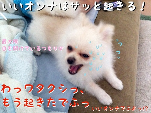 自称『いいオンナ』の朝-3.jpg
