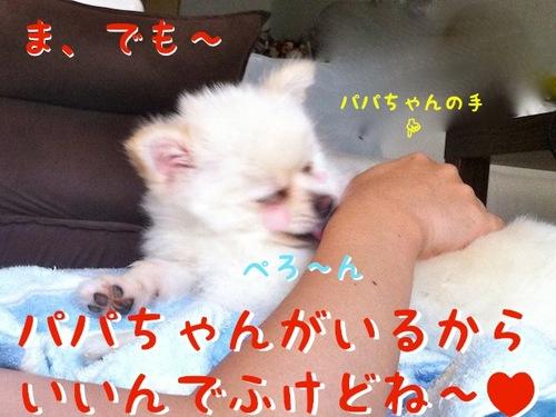 IMG_2775.JPG