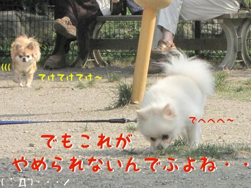 IMG_4629.JPG