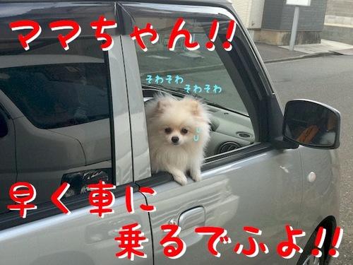 IMG_6357.JPG