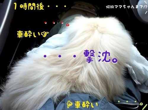 IMG_7434.JPG