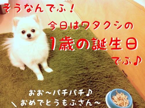 IMG_9924.JPG