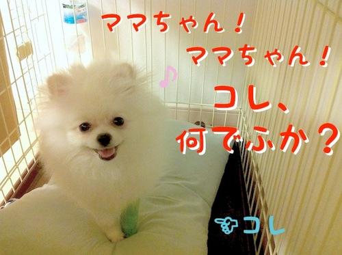 Photo 10月 09, 10 04 34 午後.jpg