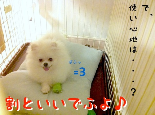 Photo 10月 09, 10 07 51 午後.jpg