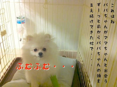 Photo 10月 09, 10 11 41 午後.jpg