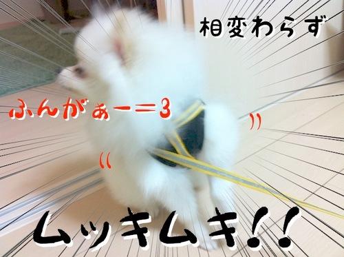 Photo 10月 22, 11 10 20 午後.jpg