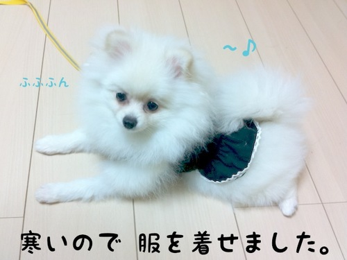 Photo 10月 22, 11 20 10 午後.jpg