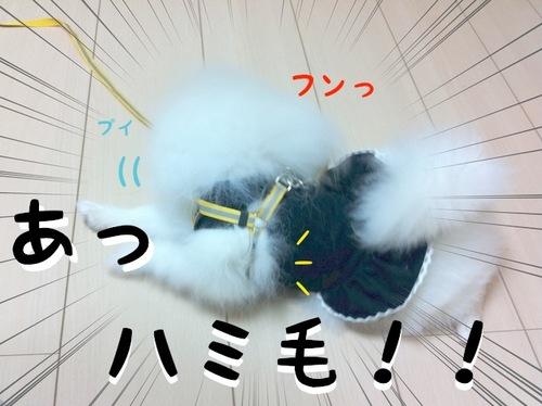 Photo 10月 22, 11 25 53 午後.jpg