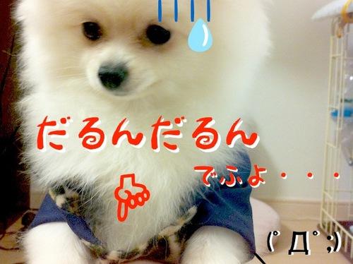 Photo 10月 26, 7 58 56 午後.jpg