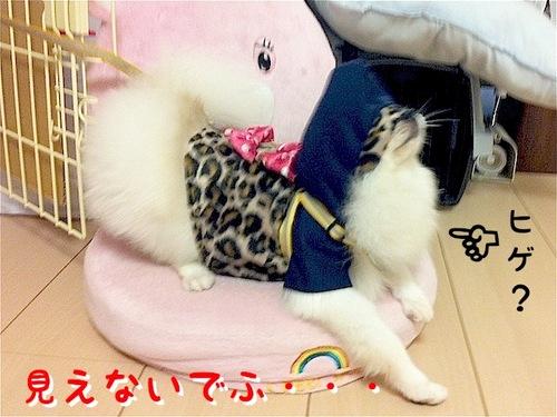 Photo 10月 29, 3 42 39 午後.jpg