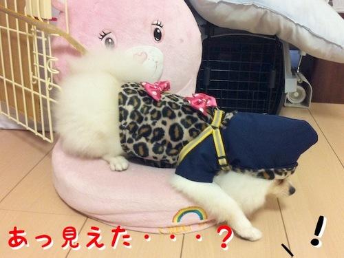 Photo 10月 29, 3 43 17 午後.jpg