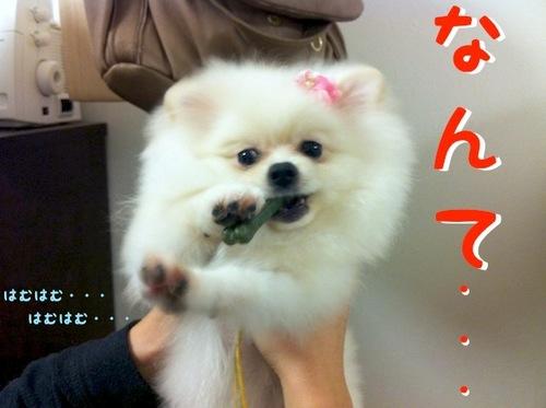 Photo 11月 03, 1 47 51 午後.jpg