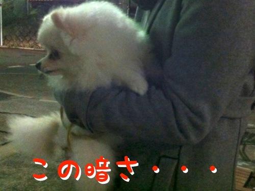 Photo 11月 07, 2 37 32 午後.jpg