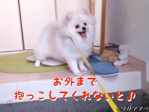 Photo 11月 16, 10 56 31 午後.jpg