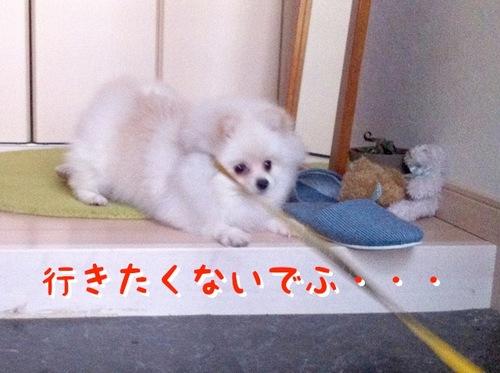 Photo 11月 16, 10 57 03 午後.jpg