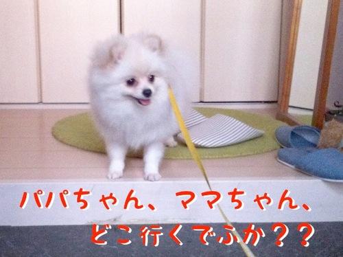 Photo 11月 16, 10 57 18 午後.jpg