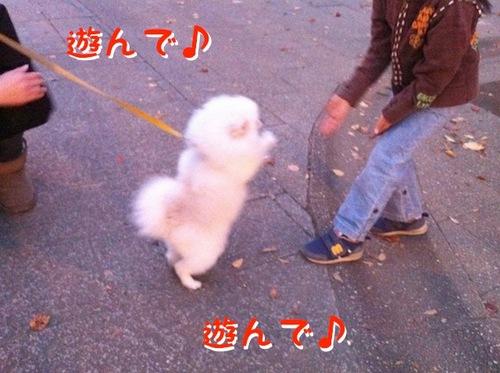 Photo 11月 22, 11 57 42 午後.jpg