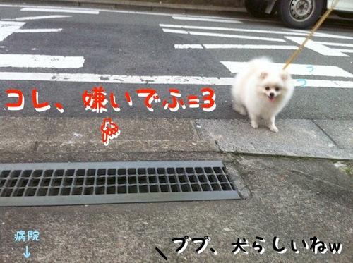Photo 11月 23, 1 51 55 午前.jpg