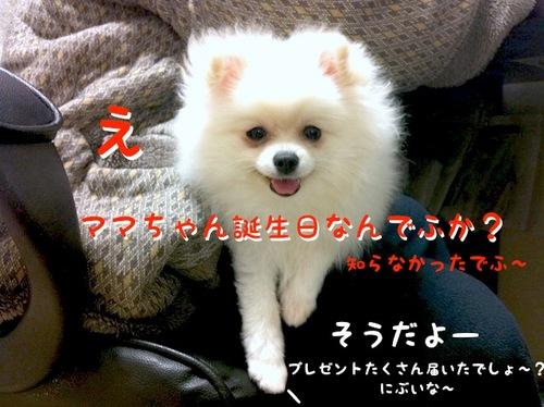 Photo 11月 25, 11 17 30 午後.jpg