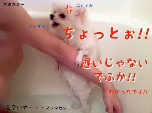 Photo 11月 27, 4 41 50 午後.jpg