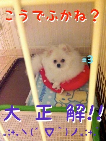 Photo 11月 30, 1 00 03 午後.jpg