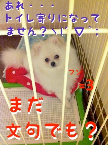 Photo 11月 30, 1 00 56 午後.jpg