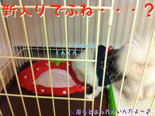 Photo 11月 30, 12 01 14 午前.jpg