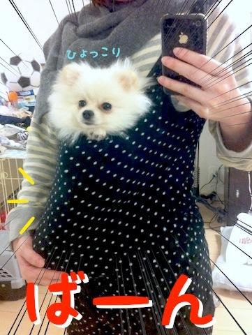 Photo 12月 04, 6 53 28 午後.jpg