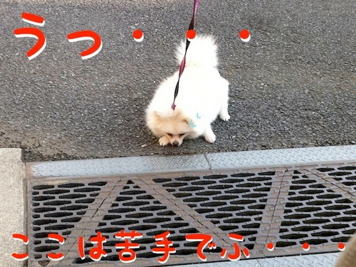 Photo 12月 08, 8 17 46 午後.jpg