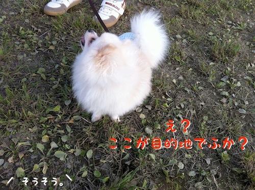 Photo 12月 08, 8 20 20 午後.jpg